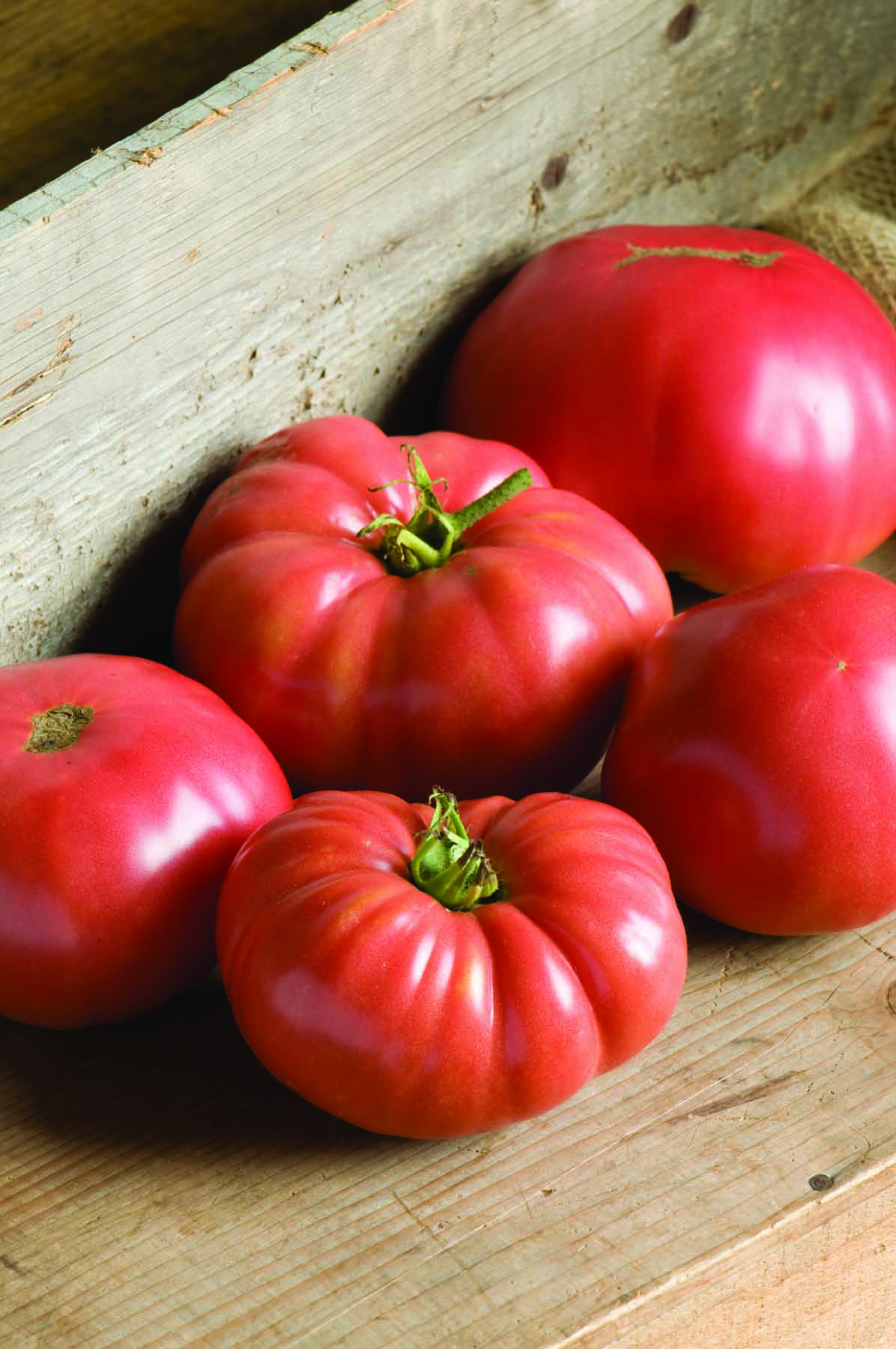 Stock photo of tomatoes.
