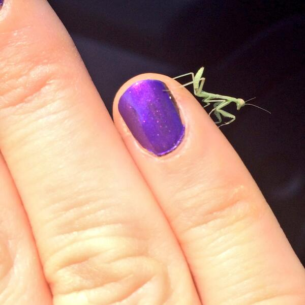 Close up of manicured nails with a tiny green bug perched on one finger.