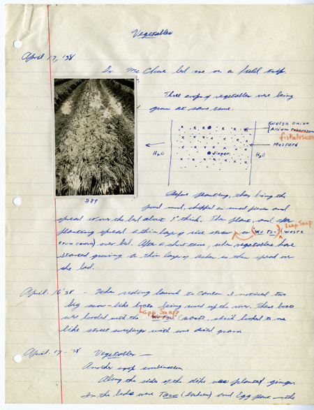 Snapshot of rows of vegetables pasted onto a looseleaf notebook page, with extended handwritten descriptions and a sketch of methods of planting and Adlard's travel observations.