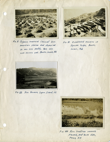 4 snapshots pasted onto a looseleaf notebook page. Clockwise: Organic material carried from mountain and deposited in new rice paddy; Established terraces; Rice seedlings; Rice terraces. All in Philippines.