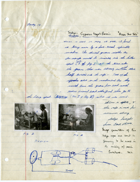 Richard Adlard notebook page wiht handwritten text, hand-drawn diagram, and two photos of a woman using sedge to make rope, China, late 1930s