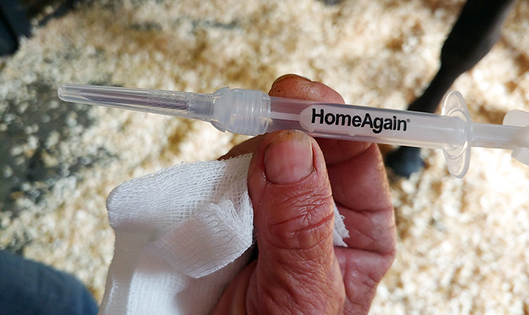 A close-up of a syringe labeled HomeAgain