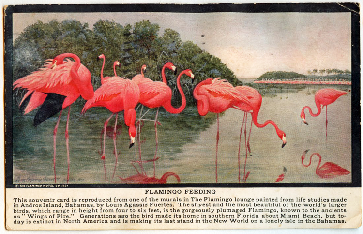 Postcard featuring mural of a flock of flamingos feeding