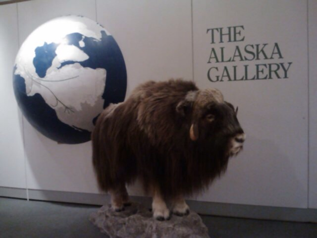 Entrance to The Alaska Gallery at the Anchorage Museum