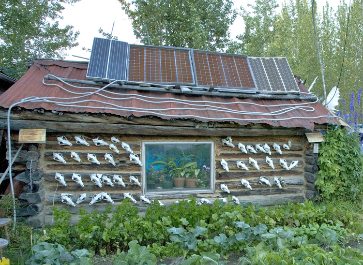 A remote cabin in Alaska, covered with deer skulls, with solar panels on the roof