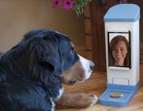 Video chat device for pets and their owners.
