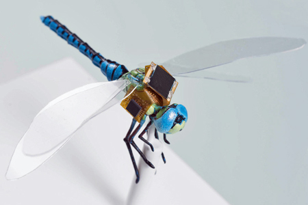 Surveillance system on to-scale model of a dragonfly