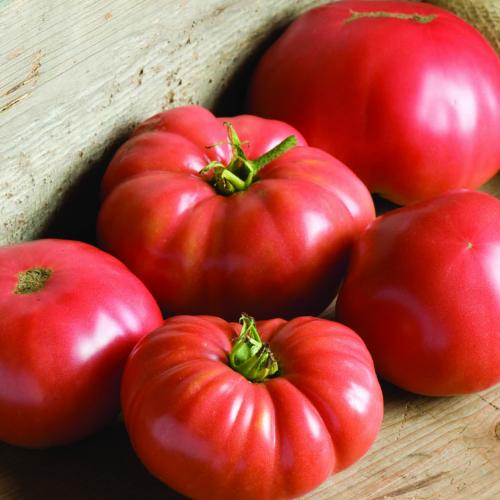 Stock photo of tomatoes